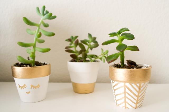 Plants (23 of 27)