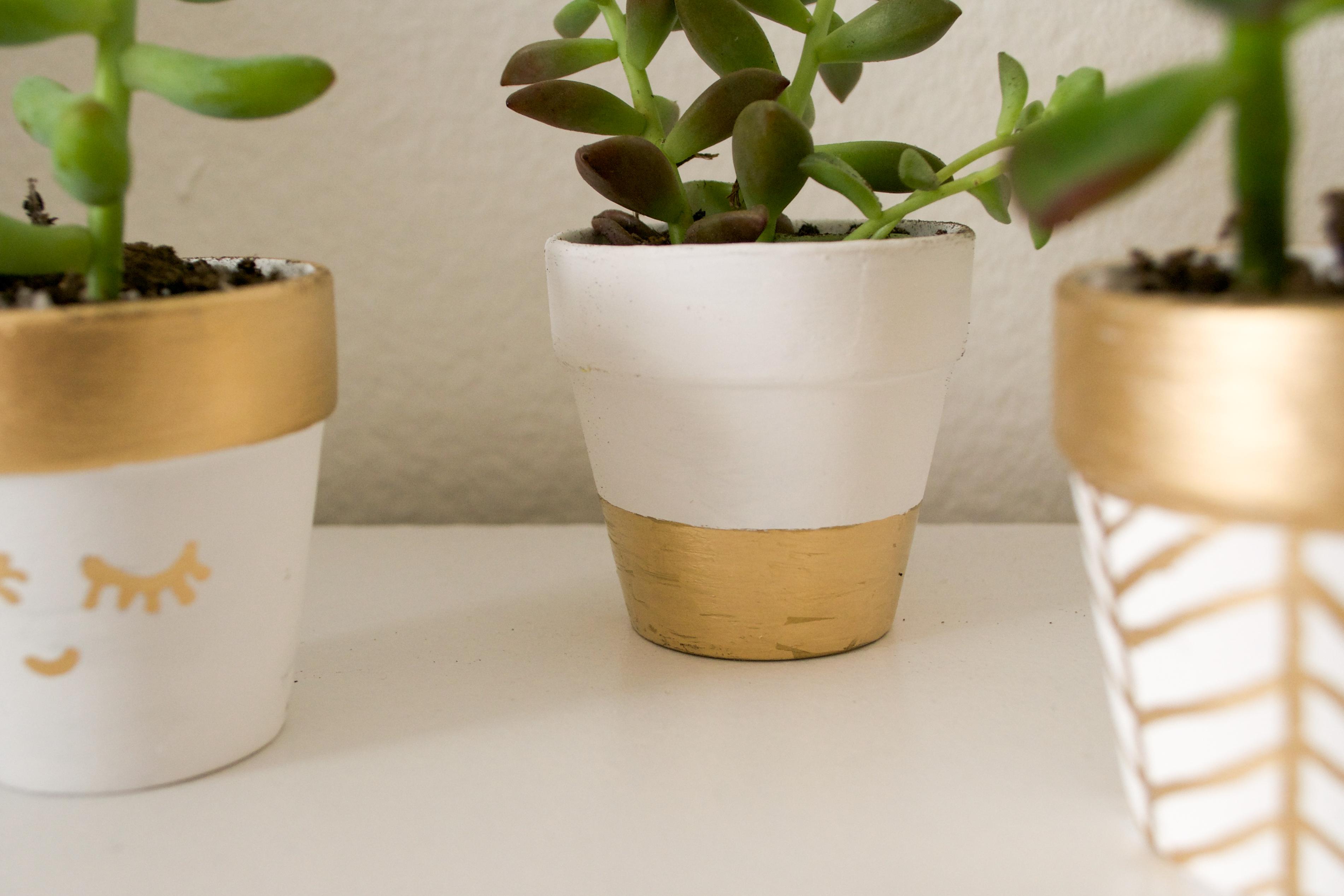 Plants (25 of 27)
