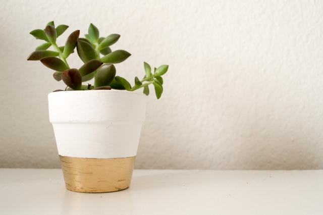 Plants (27 of 27)