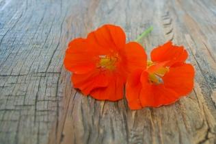 FlowerBookmarks (1 of 17)